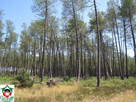 Vente terrain BIGANOS  175 000  €