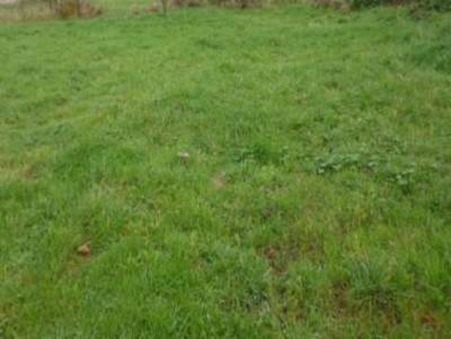 vente terrain CASTELNAU D'ESTRETEFONDS 550m2 84000€
