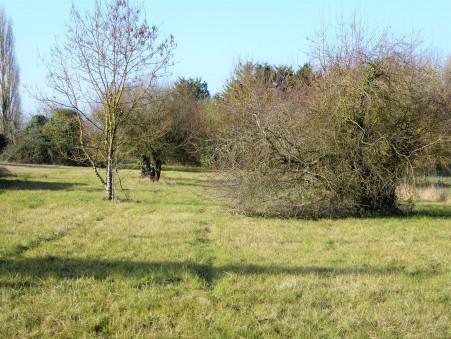 Terrain 93175 € sur La Jard (17460) - Réf. 353