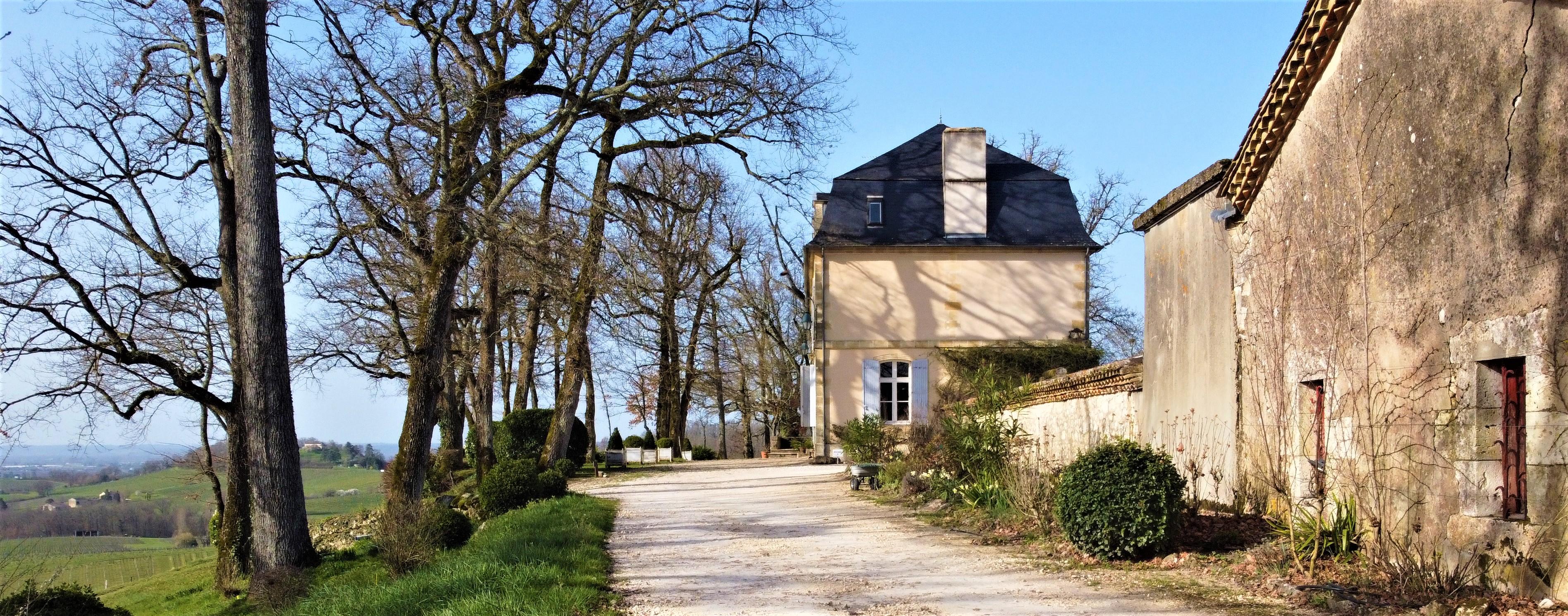 Vineyard for sale France